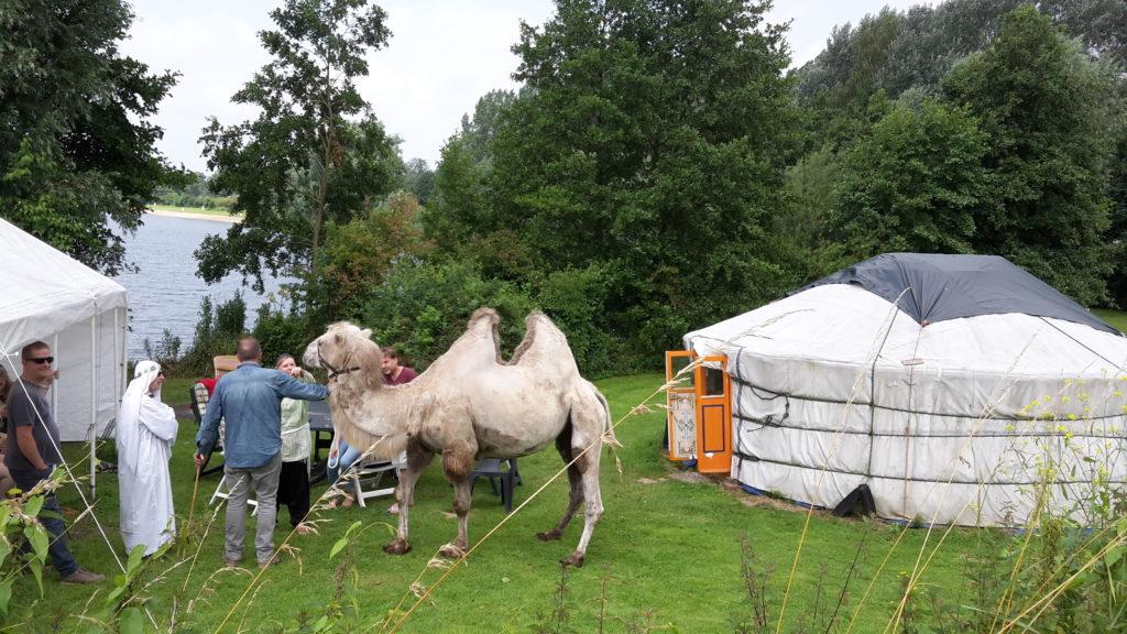 """Een kameel met """"drijver"""